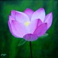imagen de cuadro Oleo Mirelu. Título: Flor de Loto